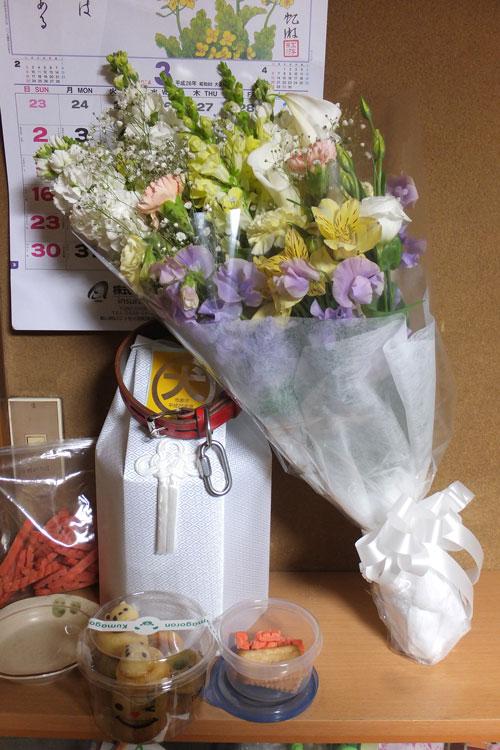 2014_3_1_flower